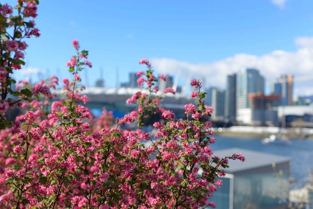Spring in Vancouver