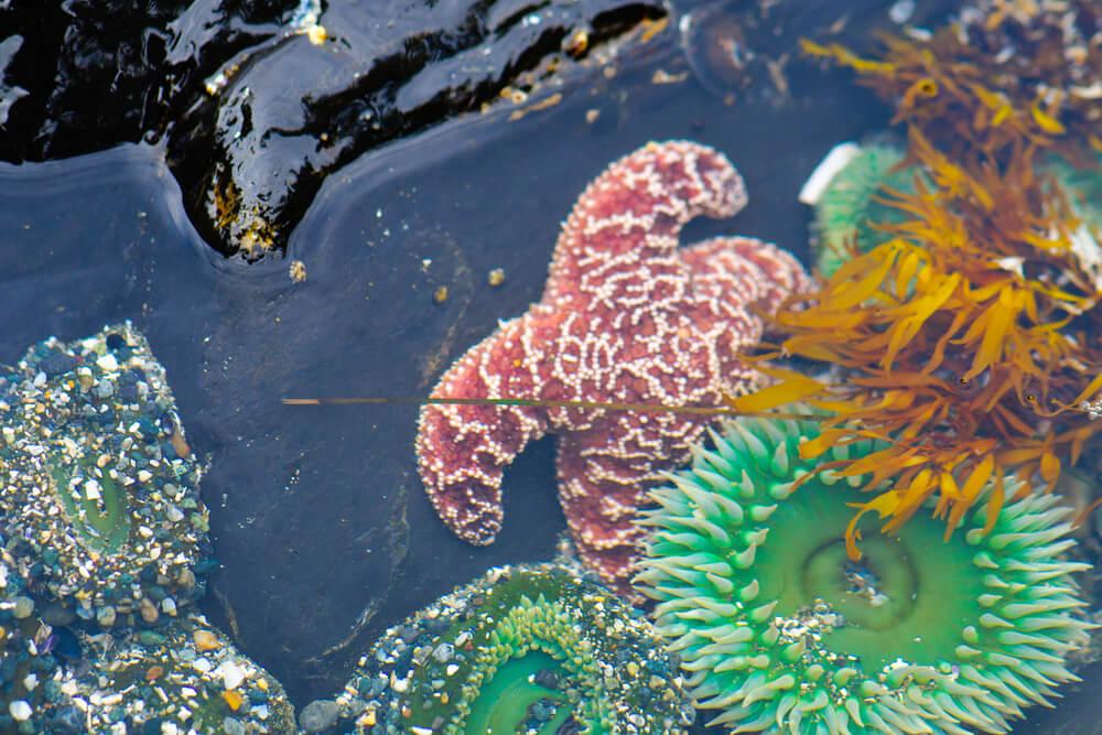 vancouver marine life