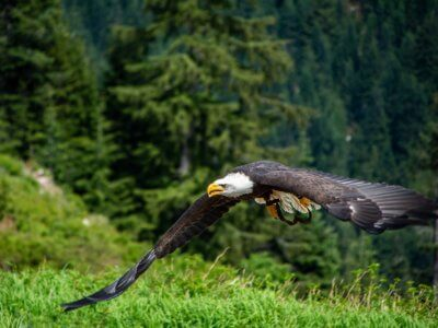 Wildlife BC